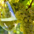 vino moscato, aromas, sabores, tonalidades, temperatura de servicio y más