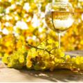 los mejores vinos stella rosa, caracteristicas, historia, clasificacion y mas